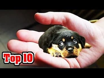 Do You Know What the 10 Smallest Dog Breeds Are?