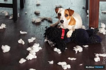 Does Your Pet Demolish Your Home When You Are Away?