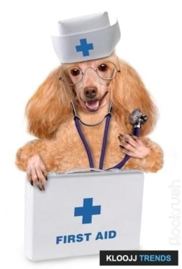 Supplies for Your Pet's First-Aid Kit