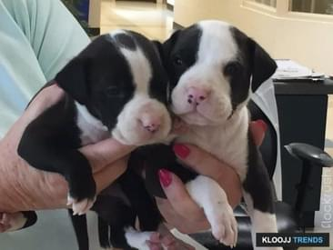 Police Officer Rescues Puppies Locked In A Hot Car