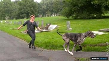 Pro Tips on Dog Walking
