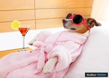 Beauty Tips That Can Invoke the Goddess of Style in Your Dog