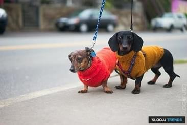 From Novelty to Practicality, Why Dog Sweaters Are In