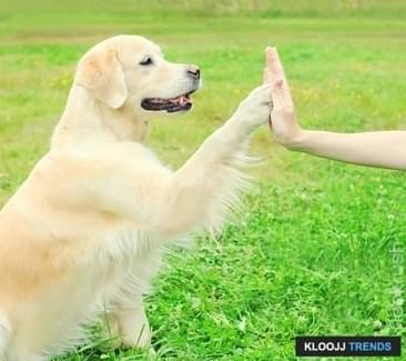 Teaching Your Dog to Play Patty Cake