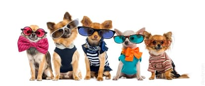 Make Your Fido Look Stunning
