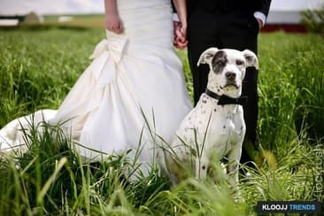 Tips on Including Your Dog in Your Wedding