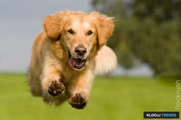 Having Trouble Recalling Your Dog?