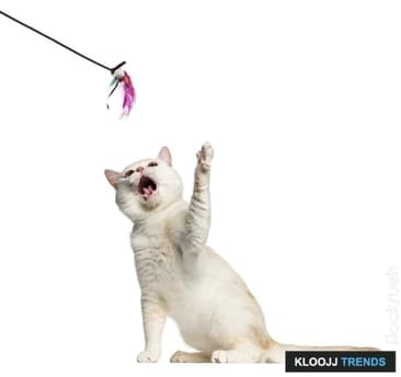 Interactive Toys for Your Active Cat