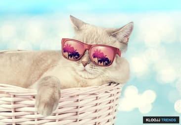 New York City Kitties