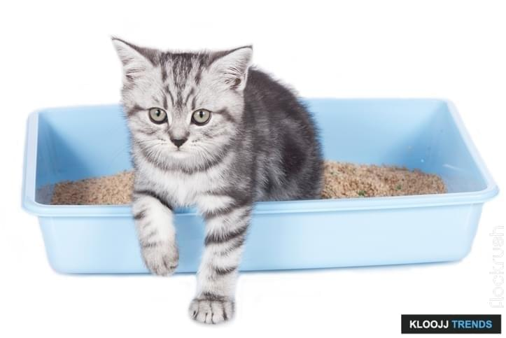 Why would cats not use the litter box