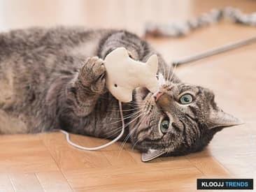 Cat Toy Dangers