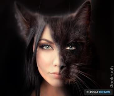 In Cat Fashion