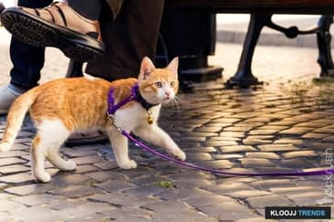 Cats on Leashes