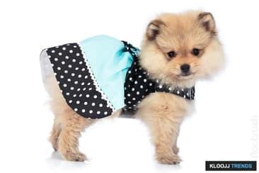 Pet Fashion Dos and Don'ts