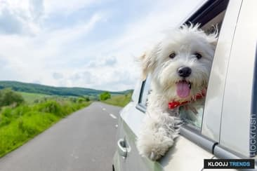 Travel During the Dog Days of Summer