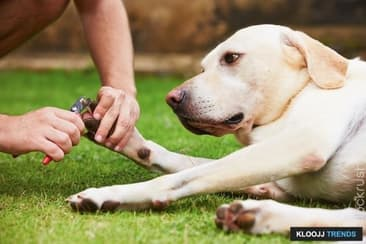 Why You Should Clip Your Dog's Nails