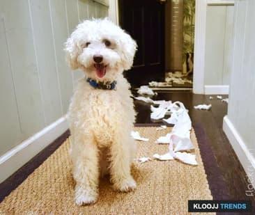 Unwanted DOGGY Behavior: Reduce It