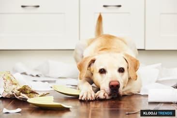 Pet Misbehaving- Is It Your Fault?