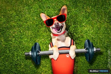 Your Dog: Why Regular Exercise Is Important