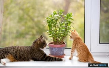 Plants to Avoid with Cats