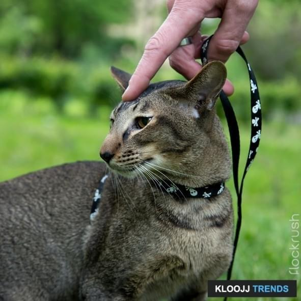 man hand leash the cat outdoor during walk