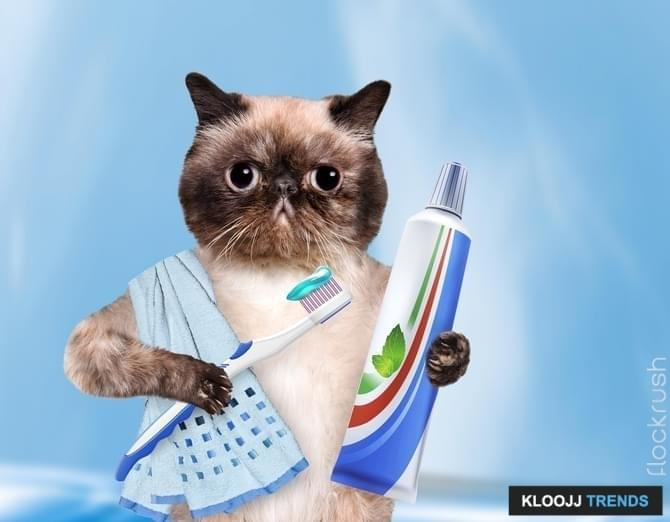 Cat keeps in paw toothpaste and toothbrush.