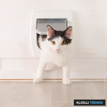 Learn to Use the Kitty Door