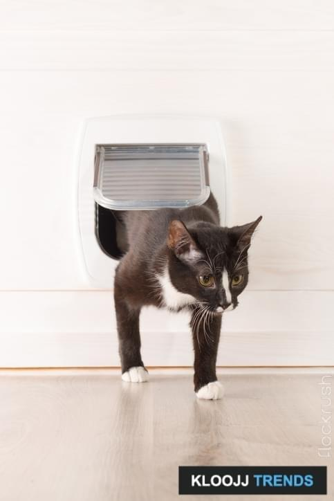 Cat passing through the cat door at home & Learn to Use the Kitty Door pezcame.com