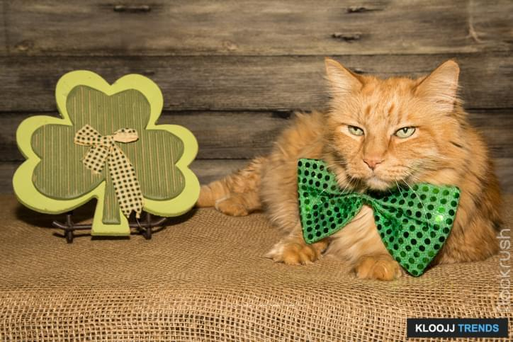 A cute cat on St. Patrick's Day.