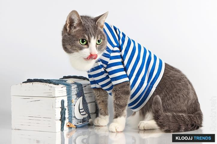 grey cat with tongue in seaman suit on grey background