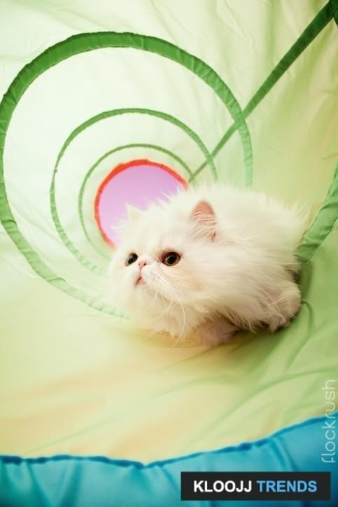 Persian cat playing in a green tunnel. Note: grain added.