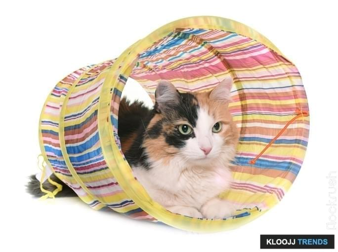 tricolor cat and tunnel in front of white background