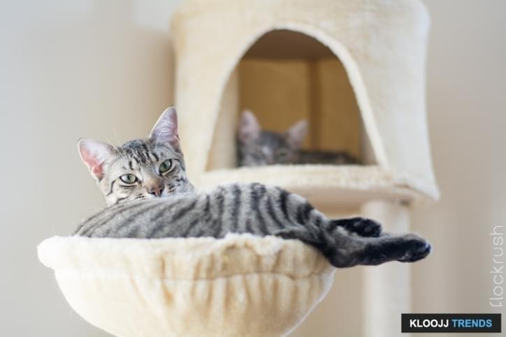 Cat relaxing in a cat tree condo with a second cat in the background