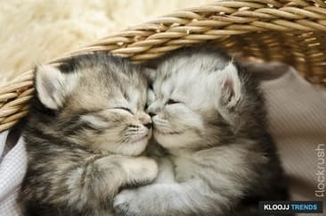 Kitten Basic Training