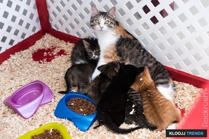 Three colored cat with her little kittens