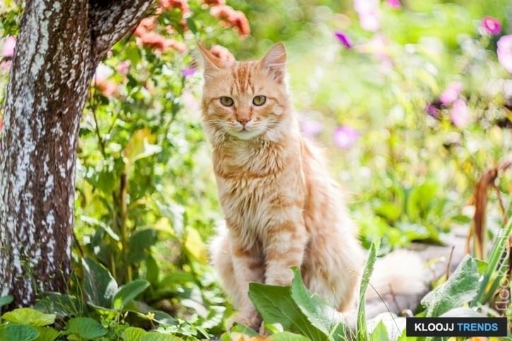 DIY Cat Garden