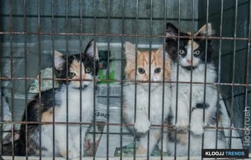 Consider a Shelter Cat