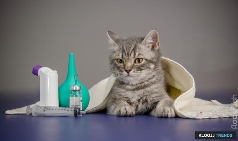 little kitten is sick, treatment kitten