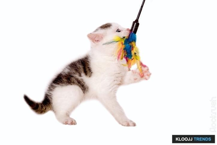 young cat playing with cat toys isolated on white background
