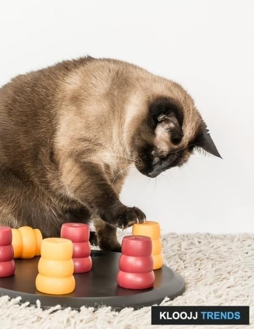 Clever siamese cat solving pet puzzle to get to the treats - vertical.