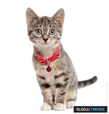 Collars, Tags: Your Feline's Ultimate Safety Net