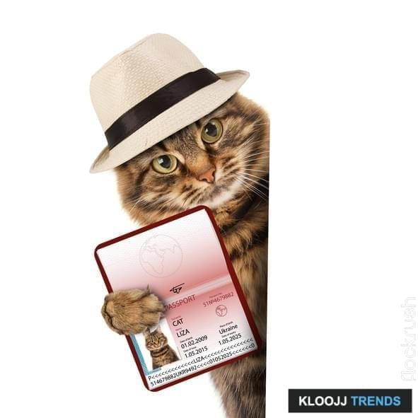 funny cat with passport