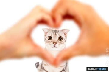 How You Can Teach Your Cat to Love You