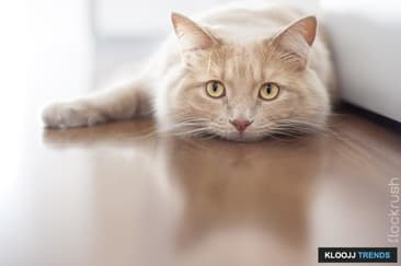Help For Cats Scared or Upset