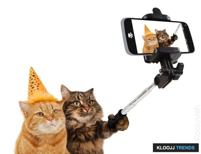 Funny cats - Selfie picture. Selfie stick in his hand. Funny cats are taking a selfie with smartphone camera. Funny cats are celebrating the birthday. Selfie party .