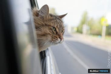 Cats & Car Travel 101