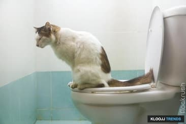 Train Your Feline To Use His Toilet