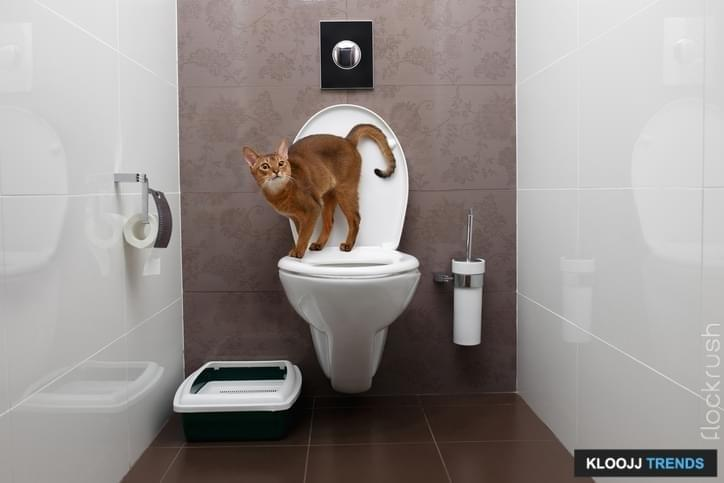 Curious Abyssinian Cat uses a toilet bowl