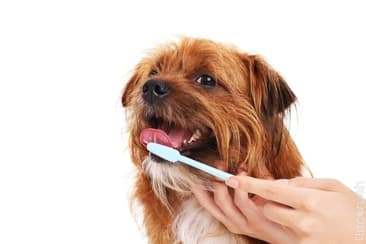 Did You Brush Your Dog's Teeth Today?