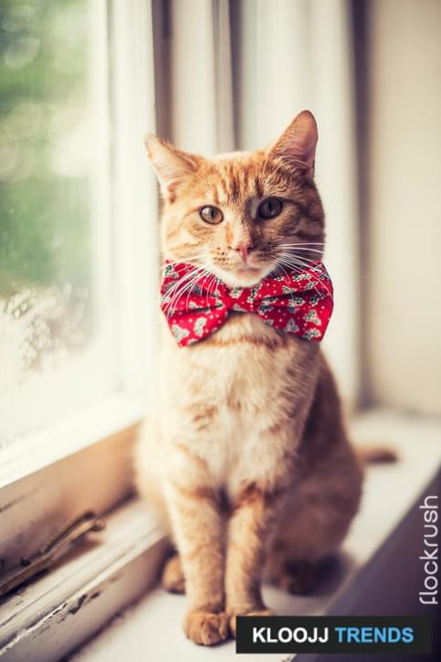 Ginger cat wearing red bow tie